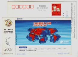 Globe Map,earth Five Continents,geography,gold En Fish,CN03 Liaoning Mobile Gotone Business Advert Pre-stamped Card - Geography