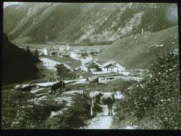 Photo Plaque De Verre . N Et B , Positif. Suisse. Casaccia. Val Bregaglia.  N°1943 - Diapositiva Su Vetro