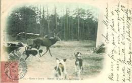 Chasse à Courre  Hallali  Le Cerf Suivi Des Chiens - Hunting