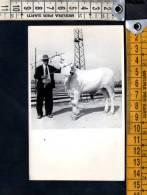 D2276 FERRANIA - VERA FOTOGRAFIA - Mucca, Cow, Koe, Vache, Vaca, 牛 , кор 86;ва - Anonymous Persons