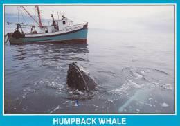 Boat, Humpback Whale Watching, Briar Island, Nova Scotia, Canada,  50-70s - Neuschottland