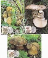 Slovakia - Carte Maxima, Mushroom -  Boletus Aereus.....Year 1997 - Mushrooms