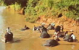 Asie > (Sri Lanka ) Elephants Bathing In Mahaweli Ganga Katugastota ( Editions : Ceylon Pictorials CP-82) *PRIX FIXE - Sri Lanka (Ceylon)
