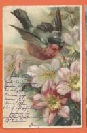 S179, Belle Fantaisie, Rouge - Gorge, Fleur De Pommier, Précurseur, Circulée 1902 - Vogels