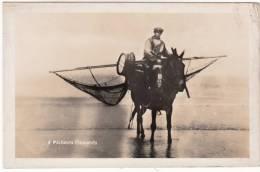 Pêcheurs Flamands, Paardevisser, Fotokaart, ZELDZAAM (pk8283) - Nieuwpoort