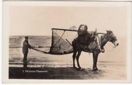 Pêcheurs Flamands, Paardevisser, Fotokaart, ZELDZAAM (pk8284) - Nieuwpoort