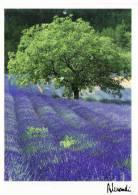FRANCIA - Cartolina Viaggiata Nel 2012 - Provence - Harmonie Lumineuse - Provence-Alpes-Côte D'Azur