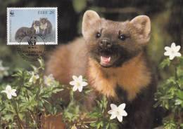 WWF - 130,31 - CM-MC - € 1,00 - 9-7-1992 - 28 - Pine Marten - Ireland 1128212 - W.W.F.