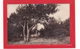 SABLES D'OR-LES-PINS (22) / Sous Bois - France