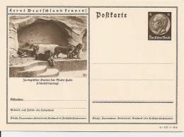 DR P 236 41-172-B6 ** Bild Halle, Zoo, Löwen - Postwaardestukken