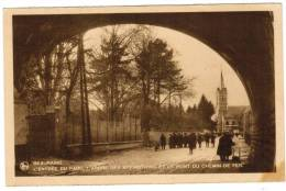 CPA Beauraing, Avenue De La Grotte Et Arbre Des Apparitions (pk8397) - Beauraing