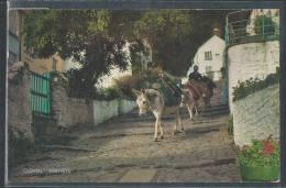 - CPSM ANGLETERRE - Clovelly, The Donkeys - Clovelly