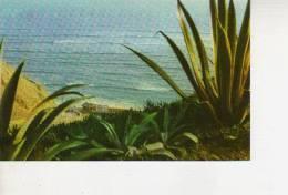 PLAYA DE SAN ISIDRO   LIMA  PERU  OHL