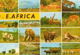 """Afrique > EAST -AFRICA-  Multi Vues (animaux) (Philatélie Timbre Stamp """" KENYA (oiseaux) """") *PRIX FIXE - Kenya"""