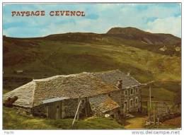 48.. Paysage Cevenol. Plateau Cévenol. En Arrière-plan Le Mont Mézenc. - France
