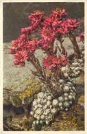 THEMES - FLEURS - Joubarbe Aranéeuse - Flores, Plantas & Arboles