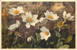 THEMES - FLEURS - Chênette-thé Suisse - Flores, Plantas & Arboles