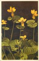 THEMES - FLEURS - Violette Jaune - Flores, Plantas & Arboles