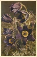 THEMES - FLEURS - Anémone Montagnarde - Flores, Plantas & Arboles