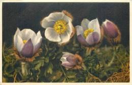 THEMES - FLEURS - Anémone Des Neiges - Flores, Plantas & Arboles
