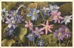 THEMES - FLEURS - Anémone Hepatica - Hépatique Herbe De La Trinité - Flores, Plantas & Arboles