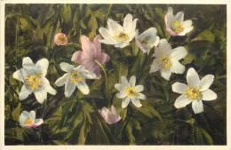 THEMES - FLEURS - Anémone Némorosa - Flores, Plantas & Arboles