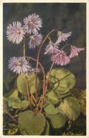 THEMES - FLEURS - Soldanelle Des Alpes - Flores, Plantas & Arboles