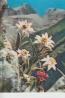 MATERIAL - 3D - Blumen - Edelweiss - Postcards