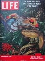 Magazine LIFE - OCTOBER 18 , 1954 -  INTERNATIONAL EDITION -   (3020) - Nouvelles/ Affaires Courantes