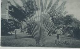 KKS 247/ C P A   -  ASIE- JAMAICA -   TRAVELLERS PAIM - Postcards