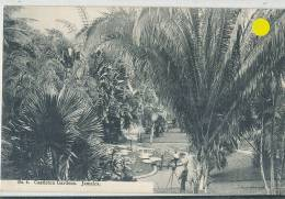 KKS 248/ C P A   -  ASIE- JAMAICA -   CASTLETON GARDENS - Postcards