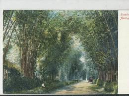 KKS 252/ C P A   -  ASIE- JAMAICA - BAMBOO AVENUE - Postcards
