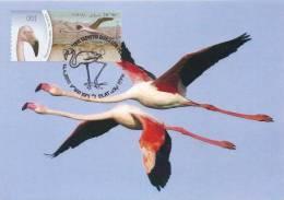 165. ISRAEL - Carte Maximum Card - ATM AMIEL 2010 - Phoenicopterus Ruber / American Flamingo / Flamant Caraïbes - Maximumkarten