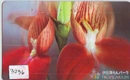Télécarte Japon FLEUR * ORCHID (3236) Orchidée Orquídea Orchidee Orquidée Orchid * Flower Phonecard Japon - Flowers