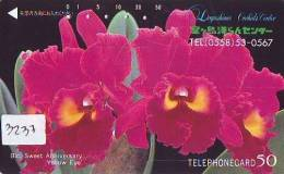 Télécarte Japon FLEUR * ORCHID (3237) Orchidée Orquídea Orchidee Orquidée Orchid * Flower Phonecard Japon - Bloemen