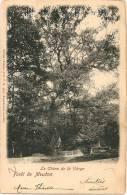 92 - CHAVILLE - Forêt De Meudon - Le Chêne De La Vierge +++ 1904 +++ P.M. Phot., #1134 +++ - Chaville