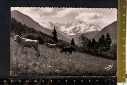 D2558 Paysages Alpestres - Paturages: Mucche, Cows, Koeien, Vaches - Ed. Arts. Ardrè - Vaches