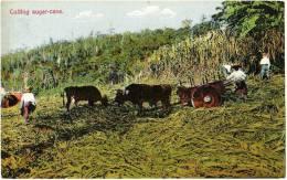 Cutting Sugar-cane - & Farming - Costa Rica