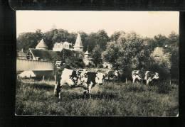 GADENCOURT  - Village Normand - Vaches Normandes -  Animaux - Frankrijk