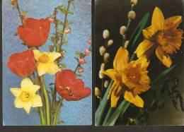 5k. FLORA - Flowers - Flower - Set Of 2 -  Tulip Narcissus - Frohe Ostern - Non Classés