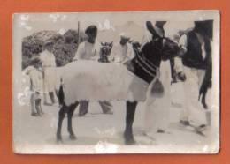 MALTA  - ORIGINAL OLD PHOTO OF MALTESE DONKY  - 1930s - Photographs