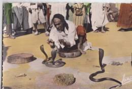 Charmeur De Serpents Snake Cobra Ethnic Vintage Original Postcard Cpa Ak (W3_1028) - Volkeren & Culturen