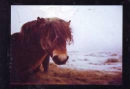 CHEVAUX,PRZEWALSKI HORSE, POST CARD UNUSED. - Pferde