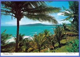 JAMAICA, Swaying Tropical Plam Trees Along Jamaica's Romantic Coast - Jamaica