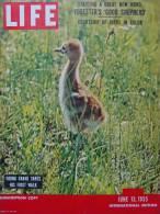 Magazine LIFE - JUNE 13 , 1955 - INTER. ED. - LA RIVIERA FRANÇAISE  - RODIN - FORD - FIAT 600 -  (3028) - Nouvelles/ Affaires Courantes