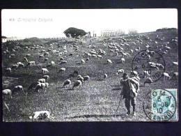 LAZIO -ROMA -CAMPAGNA ROMANA -F.P. LOTTO N°236 - Roma