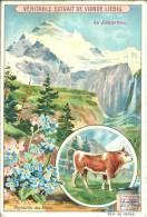 Image Publicitaire - LIEBIG - La Jungfrau - Myosotis Des Alpes - Taureau De Berne - Publicité