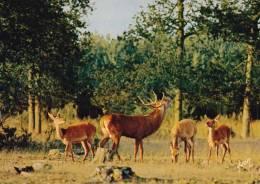 * * CERF En Forêt De Villers-Cotterets  * * - Animaux & Faune