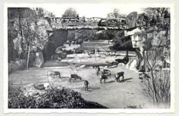 Anvers (Belgique) - Jardin Zoologique - Rennes Dans Le Grand Parc (JS) - Animaux & Faune