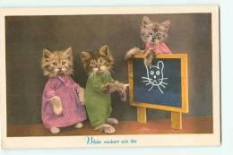 CHATS - A L' Ecole : Les élèves Et Le Tableau - Montage Photo - TBE -  2 Scans - Cats